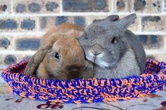 Pet rabbit bed, pet bunny bed, crochet pet bed, navy blue and orange, SIZE MEDIUM Crochet Pet, Crochet Animals, Bunny Beds, Pet Rabbit, Pet Beds, Navy Blue, Orange, Pets, Medium
