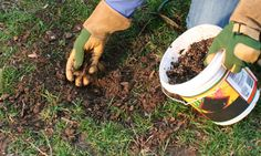 Selecting Grass Seed - We walk on it, play sports on it and expect it to look great all year long – our lawns.  But harsh weather, animals and less than ideal growing conditions take its toll, resulting in dead patches and thin lawns...