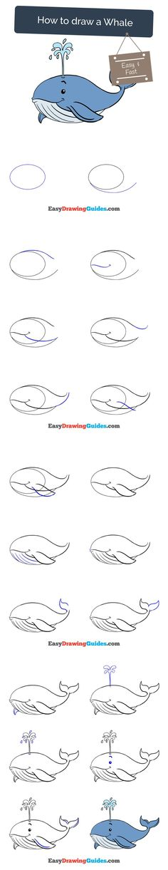 Learn How to Draw a Whale: Easy Step-by-Step Drawing Tutorial for Kids and Beginners. #whale #drawing #tutorial. See the full tutorial at https://easydrawingguides.com/how-to-draw-a-whale/