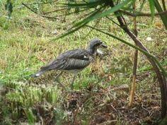 Curlews on Lamb Island