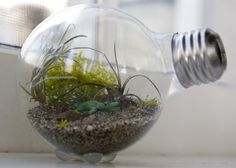 This tiny terrarium is just so cute and whimsical. We love the simple instructions for a neat DIY project!