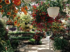 Flower aesthetic - atrium lush greenhouse views foliage classics by Classics Optics Plants Are Friends, Flower Aesthetic, Gras, Raised Garden Beds, Growing Vegetables, Pretty Flowers, Vegetable Garden, Mother Nature, Gardening Tips