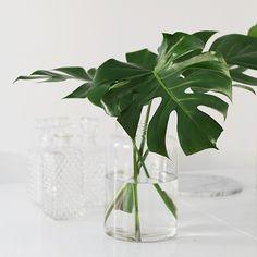 Os hablamos de una nueva y sencillísima tendencia: decorar jarrones con hojas de plantas verdes. Echa un vistazo al post porque te damos algunos consejos. http://www.rdiseno.es/tendencia-decorar-jarrones-con-hojas-de-plantas/
