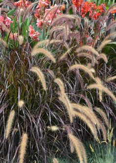 Add texture and motion and sound to your landscape with ornamental grasses like the popular purple fountain grass. Get tips on selecting ornamental grasses for your fall garden at The Home Depot's Garden Club.