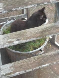 Ipv kattengras, mooie teil  met gras staat leuk en functioneel