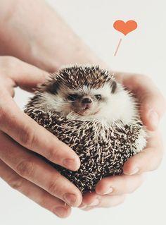 Hedgehog Love 8x10 photographic print by Roighn on Etsy