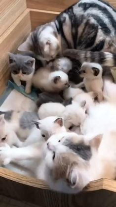 Cute Little Kittens, Cute Baby Cats, Cute Kitten Gif, Cute Cats And Kittens, Kittens Cutest, Cute Dogs, Baby Animals Super Cute, Cute Little Animals, Funny Cute Cats