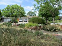 A Mix Of Native Grasses Give This Garden A U0027meadow Look.u0027