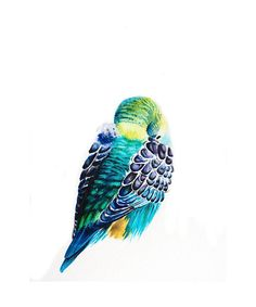 Shhh she's sleeping - Sleeping Parakeet Original Watercolor Art Print Colorful Multicolored Green Blue Teal Budgie Bird turquoise tropical