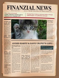 Twitter / @lulu_lindi: Breaking News: Avoid Hartz and Save Your Pet's Life!