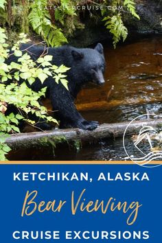 Bear Viewing in Ketchikan, Alaska on a Cruise | Given the high concentration of black bears in Alaska, we provide our input on the best bear viewing sites in Ketchikan, Alaska on a cruise. Cruise Excursions, Cruise Destinations, Cruise Port, Cruise Vacation, Alaska Cruise Tips, Tongass National Forest, Cruise Ship Reviews, Ketchikan Alaska, Visit Alaska