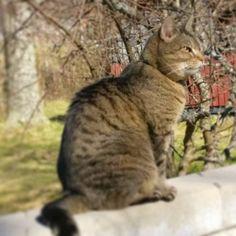 Good day sunshine! ☀ #warmfeeling #catsofinstagram #thefinnishcat #mollycatfinland #catoftheday #sittingonawall #gooddaysunshine #instacat #happycat #instalike #pets #coolcat #instacats #catoftheday #catsofig #instalikes #meow #catlover #morning #cute #catsagram #kissa #kitty #pussycat #猫 #katzen #petcat #katter