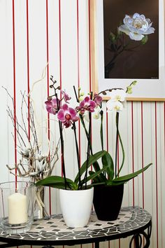 Orchidea locsolás kulisszatitkai – Balkonada
