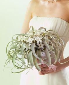 人気の秘密はコロンとしたフォルム♡ぷにぷに可愛い多肉植物はweddingでも大活躍♩にて紹介している画像