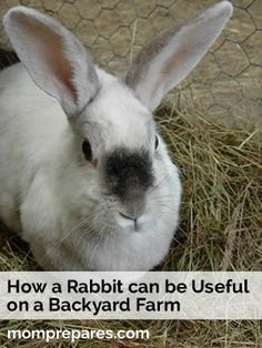 How a Rabbit can be Useful on Your Backyard Farm. Maybe NOW hubby will let me get a rabbit lol No more can he used the argument that they are usless. Easter bunnies for the boys? I think yes!