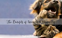 The Benefits of Spay