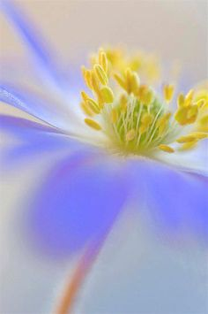 .blue yellow
