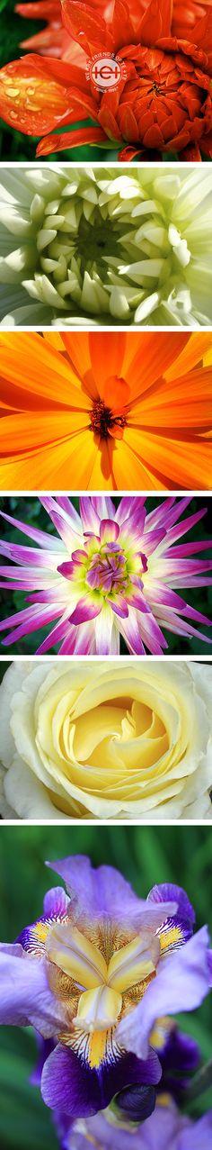 Bunte Vielfalt so weit das Auge reicht, aber jede Blüte hat ihr Herz am rechten Fleck.