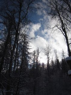 Dark woods, blue skies.  My yard.  Northport, WA