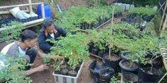 Plants, Cuba, Plant, Planting, Planets