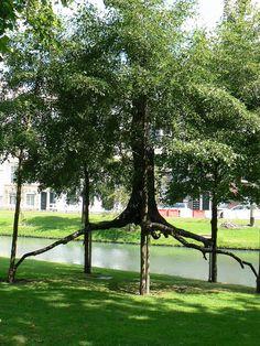 Penone Rotterdam 03 - Giuseppe Penone - Wikipedia