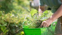 7 jednoduchých receptov: Vyhrajte boj nad burinou vo vašej záhrade úplne bez chemikálií!