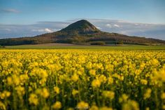 Gulács Mount Rainier, Hungary, Places To Visit, Mountains, Nature, Travel, Flowers, Naturaleza, Viajes