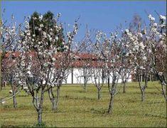 Best fruit trees for Kansas | Rural Messenger