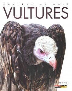 A basic exploration of the appearance, behavior, and habitat of vultures, the carrion-eating birds of prey. Also included is a story from folklore explaining why vultures are bald.