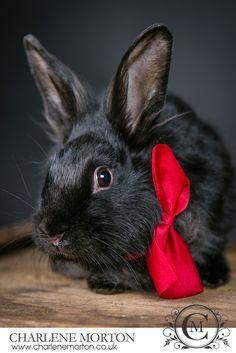 Pet rabbit photography