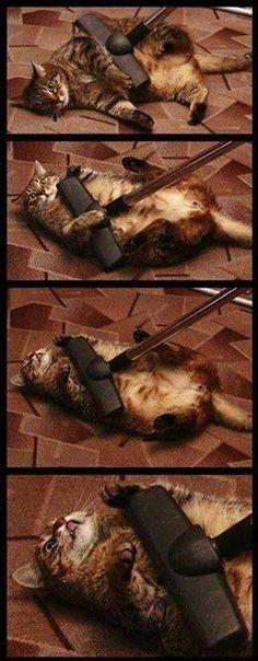 Masaje para gatos 😹😹😻 #aspiradora #tecnologia #hogar #limpieza #gato
