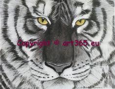 white tiger, charcoal drawn - fehér tigris, szénrajz