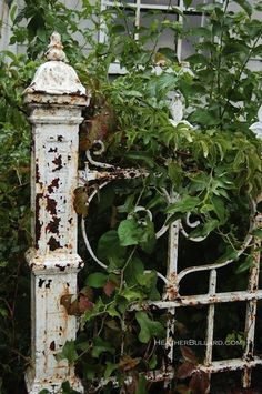 love this weathered garden gate with the over-growth  ...love the patina