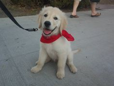 My name is Jake! I'm gonna grow up to be a therapy dog!