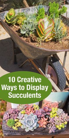 10 Creative Ways to Display Succulents! Love these ideas. Whether planting an outdoor garden or looking for pretty ways to display succulents inside of your home, get creative inspiration for displaying succulent plants! #ad