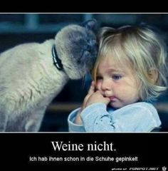 Cute Kids Playing With Funny Animals Compilation 2017 Animals And Pets, Funny Animals, Cute Animals, Siamese Cats, Cats And Kittens, Gato Animal, Photo Chat, Cat Behavior, Cat Memes