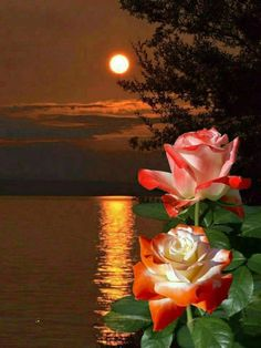 Good night ~~J Good Night Flowers, Lovely Good Night, Good Night Love Images, Good Night Sweet Dreams, Good Night Gif, Love Flowers, Sky Images, Rose Images, Rose Pictures