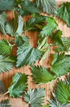 Harvesting, preparing, and cooking nettles doesn't have to be hard. Learn how.