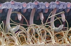20 Everyday Items Put Under the Microscope Reveal Their Hidden Complexity