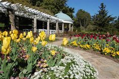 Joyner Fine Properties - Parks and Recreation