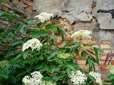 Natural Garden, Bonsai, Herbs, Nature, Plants, Sad, Compost, Balcony, Naturaleza