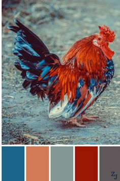 ZJ Colour Palette 892 #colourpalettes #colourinspiration #ChickenHouses