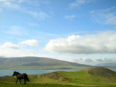 The Icelandic Horse, by Helgi Halldórsson  | Flickr