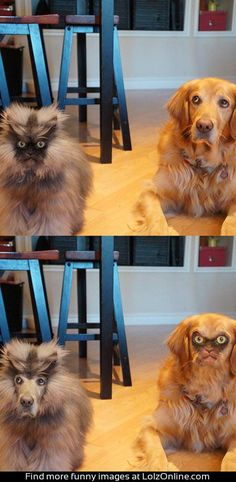 Colonel Meow faceswap...