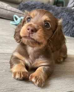 Puppies And Kitties, Dachshund Puppies, Baby Puppies, Cute Puppies, Cute Dogs, Doggies, Dachshunds, Amazing Animal Pictures, Funny Animal Pictures