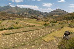 Die Ernte im äthiopischen Hochland ist karg. Mit Bewässerung kann mehrmals jährlich geerntet werden. (Bild: Thomas Imo / Photothek) Country Roads, Mountains, Nature, Travel, Culture Shock, Farmers, Country, Agriculture, Harvest