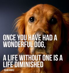 Welcome - Amazing Viral Quotes Golden Retrievers, Labrador Retrievers, Yorkshire Terriers, Beagle, Bulldogs, Beware Of Dog, You Are My Everything, Dogs For Sale, Wonder Quotes