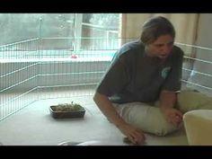 Handling and lifting Rabbits - an expert guide - Part 1 of 2 Rabbit Information, Rabbit Behavior, Rabbits, Bunnies, Handle, Future, Pets, Animals, Future Tense