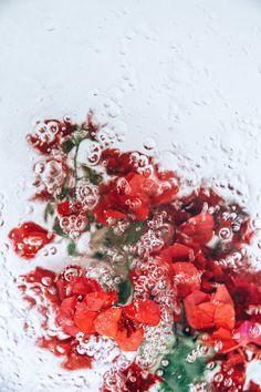 溺れる花の美しさ。花と水と泡の写真シリーズ『flotsam』 (4)