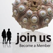 Enjoy fantastic benefits and discounts and support our scientific work: become a Member. Subscriptions For Kids, Natural History Museum, Turtle, Animals, Turtles, Animales, Animaux, Tortoise, Animal